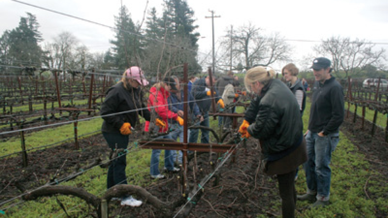 Schramsberg winemaker Keith Hock (right) oversees the pruning done by campers.
