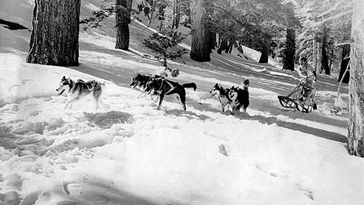 Sled dog races began in the mid-'60s and continued into the '80s