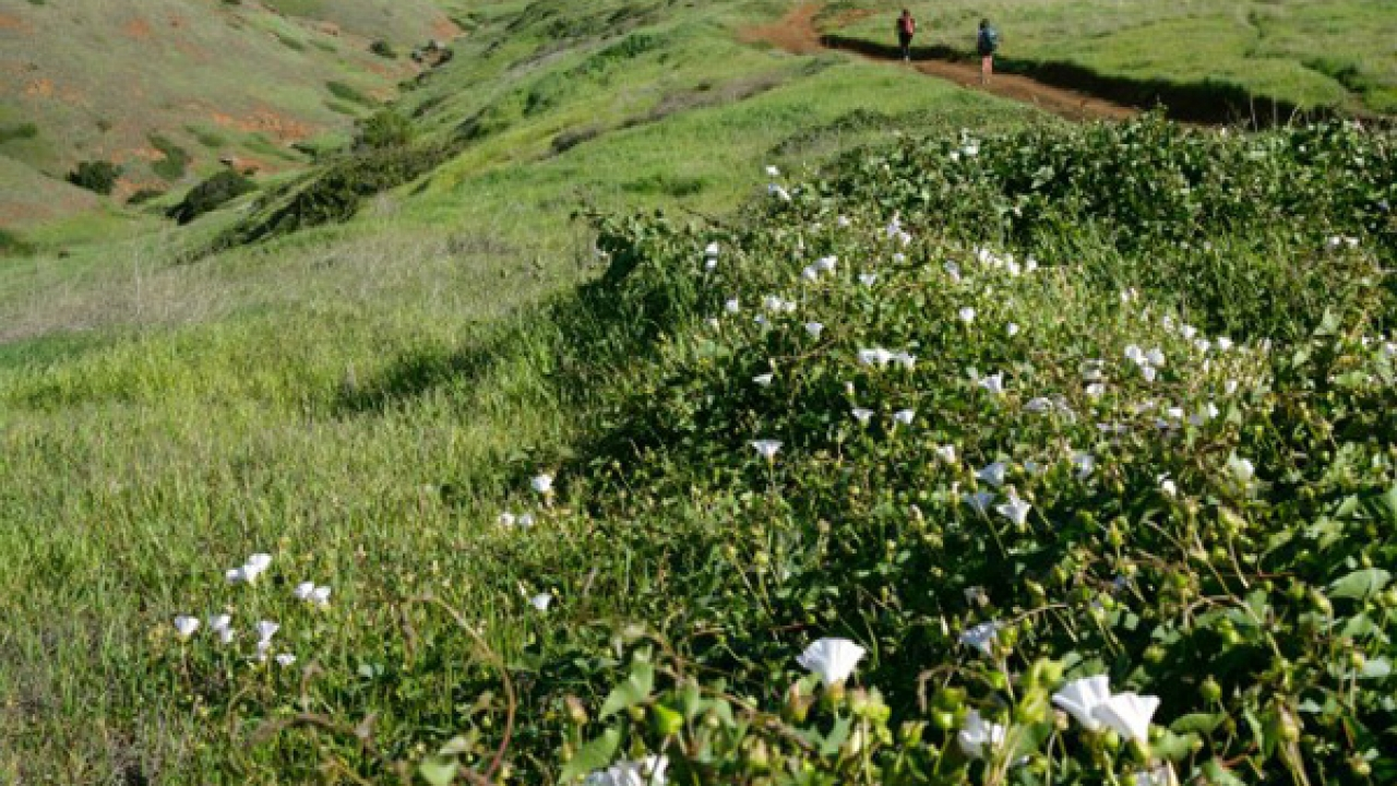Labor Day Vacation: Santa Cruz Island, Channel Islands, California