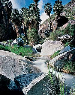 Indian Canyons, Palm Springs.