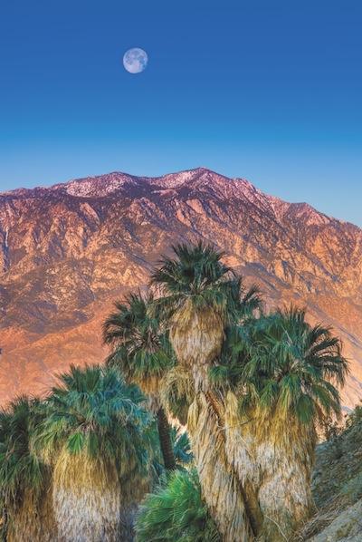 Coachella Valley Palm Trees Palm Springs Gardens
