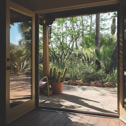 Palm Springs - desert gardens | Sleeping, Creeping, and Leaping